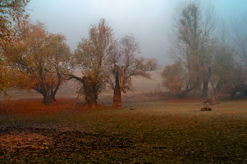 Creepy landscape showing forest on misty autumn day