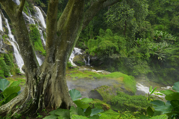 Falls in the rainforest