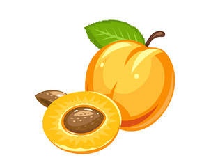 Apricot. Ripe juicy fruit with nut and leaf