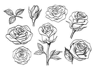 contour beautiful roses