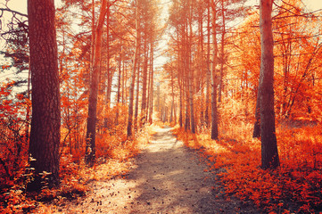 Forest sunny autumn landscape