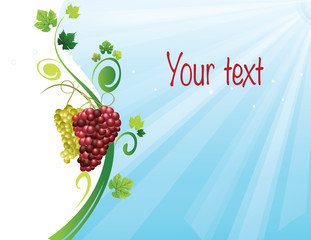 Grapes autumn background illustration, for harvest,winery,text.