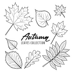 Set of vector autumn leaves. Black and white outline hand drawn fall leaves and calligraphy lettering. Isolated design elements.