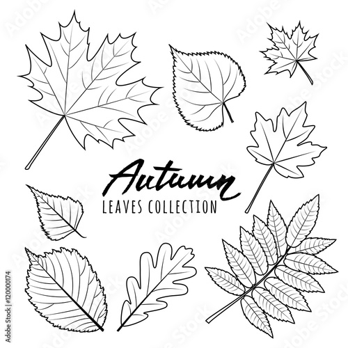 Set of vector autumn leaves Black and white outline hand drawn fall