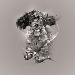 graphic portrait spaniel dog
