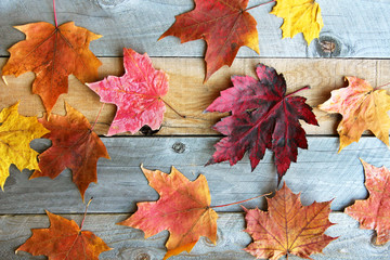 Group of Colorful Fall Maple Leaves on Wood Background