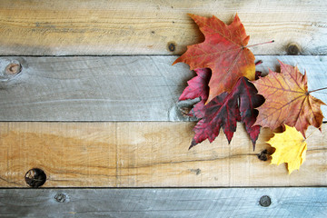 Autumn Sugar Maple Leaves Framing Rustic Wood Background Wall mural
