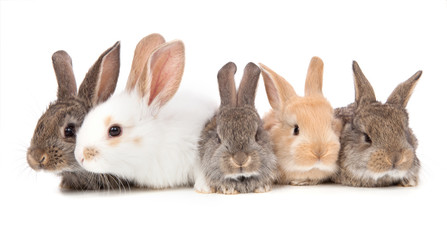 five little cute rabbit on a white background