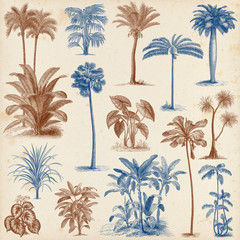 Vintage hand drawn palm trees set 2