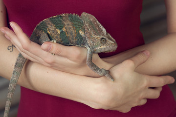 Portrait of young girl with chameleon in arms. Close up lizard photo