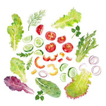 vegatebles, lettuce and herbs for salad watercolor on the white bachground