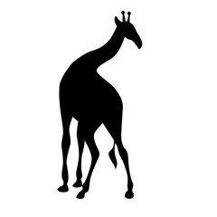 Giraffe black silhouette vector illustration isolated