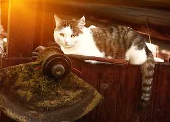 cat lay on the country house wooden porch