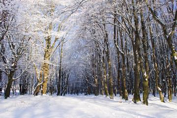 Lights in snowy winter forest landscape