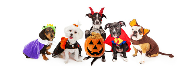 Five Dogs Wearing Halloween Costumes Banner Fototapete