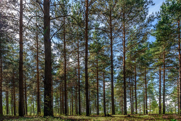 Mixed coniferous-deciduous forest