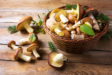 Forest picking mushrooms on the rustic wooden background