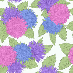 Beautiful seamless background with coloring flowers aster.