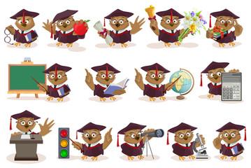 Big set owl teacher
