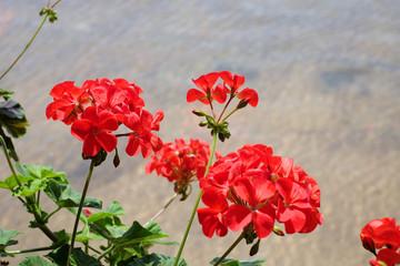 Flowers in garden.