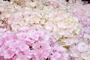 Flowers in garden, soft focus.