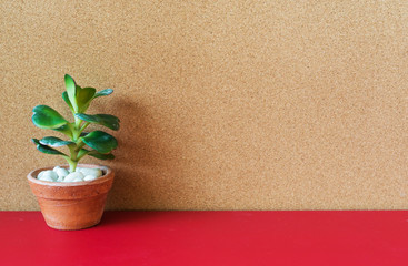 A picture of decorating cactus on red table, cork board background