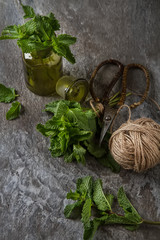 Sprig of mint in the garden green jar on a gray stone background