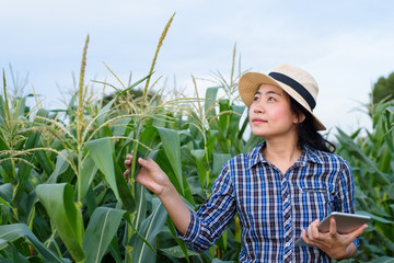 Smart Asian woman farmer in corn field with digital tablet - agriculture farming small business owner concept