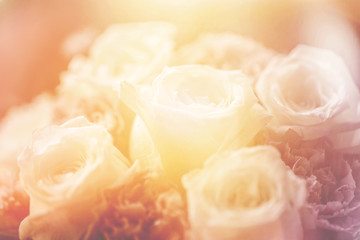 white rose sweet love concept, classic light leak vintage color tone beautiful old style for postcard or background.