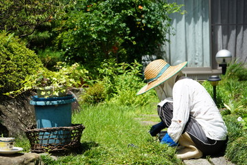 Japanese old person doing agricultural work in rural area