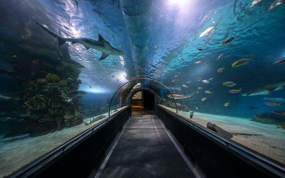 Hallway at large aquarium