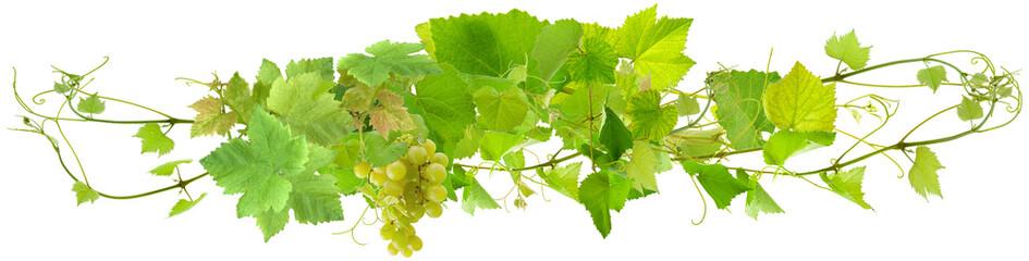 Wall Mural - grappe de raisin blanc et pampres de vigne, fond blanc