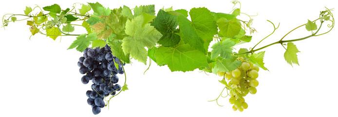 grappes de raisins et pampres de vigne