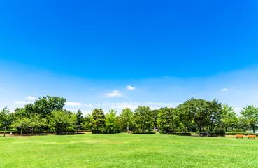 青空と公園の広場