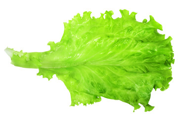 Wall Mural - The bright green juicy leaves of lettuce isolated on white background.