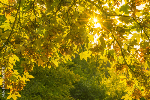 Autumn nature background and sun rays cheerful fall image for Cheerful nature
