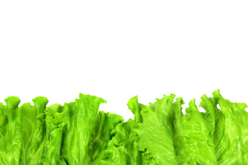 Wall Mural - Green lettuce leaves, copy space. Isolated on white background.