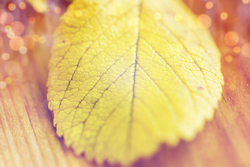 close up of yellow autumn leaf on wooden table