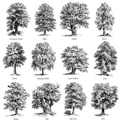 Common trees vector illustrations set