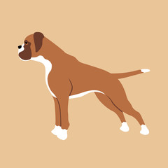 Boxer dog breed profile Flat style vector illustration