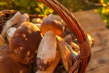 harvesting of mushrooms