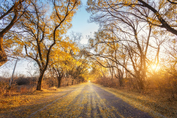 Autumn forest. Forest with country road at sunset. Colorful landscape with trees, rural road, yellow leaves and blue sky. Travel. Autumn background. Magic forest