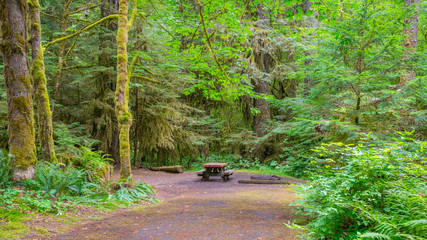 Picnic table in fairy green forest. Large trees were overgrown with moss. The sun's rays fall through the leaves. Iron Creek Campground trails, Mount St Helens - East Part