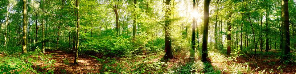 Wald Panorama bei strahlendem Sonnenschein