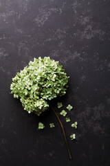 Dried flowers hydrangea on black vintage table from above. Flat lay styling.