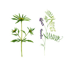 Set of watercolor drawing plants