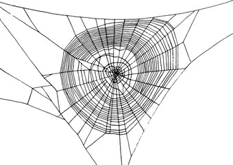 hand drawn spiderweb