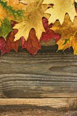Autumn leaves background. / Autumn leaves background.