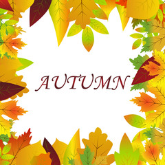 White blank on autumn background with maple leaves.