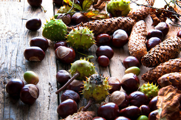 Chestnuts, acorns, withered leaves and cones. Top view